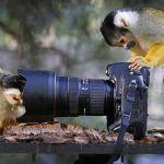 10 tips para fotógrafos profesionales